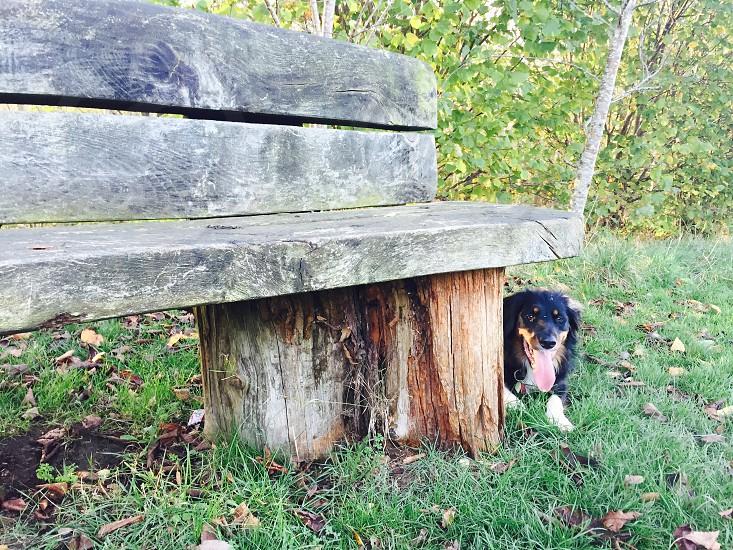 Cute dog bench forest field walk photo