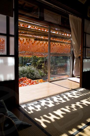 dried persimmon farm photo