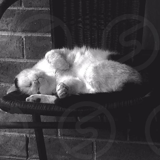 My cute little cat sleeping  photo