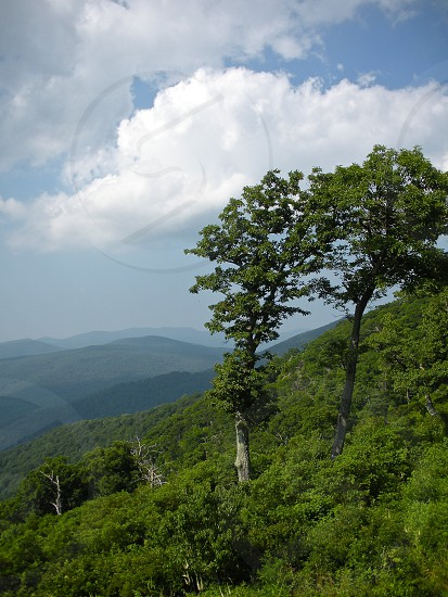 Windy mountain side. Trees. Clouds. Hills. Vertical.  photo