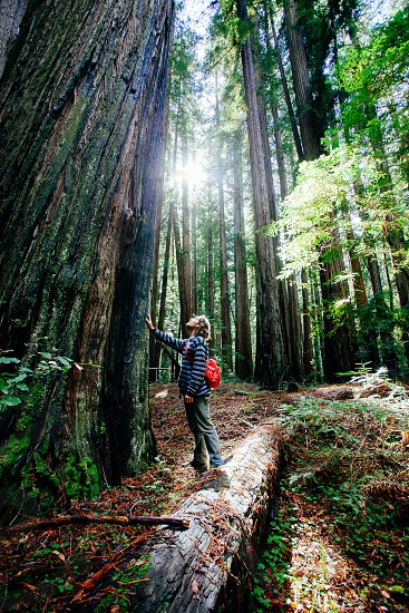 Captivated by the redwood trees photo