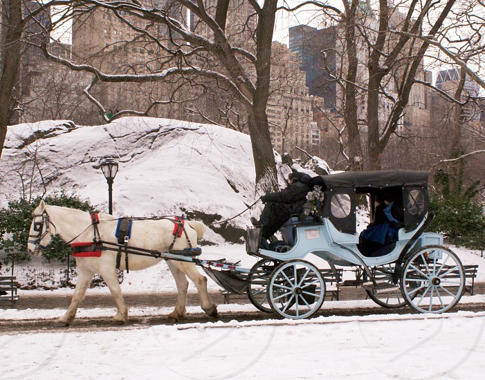 white and black horse carriage photo