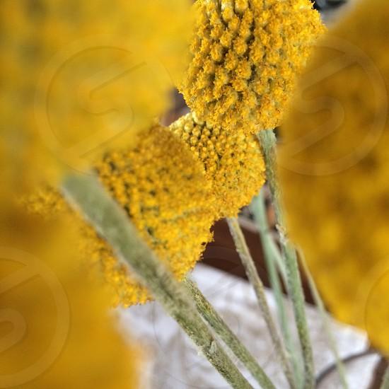 Yellow flowers joy on a stem! photo