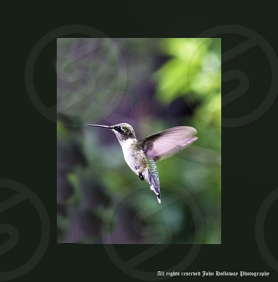 "Simplicity....""Humming Bird"" photo"