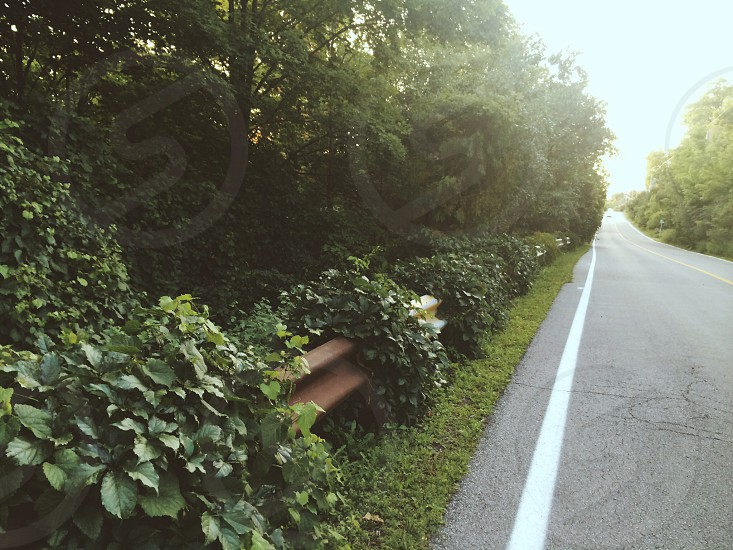 Ivy Road photo