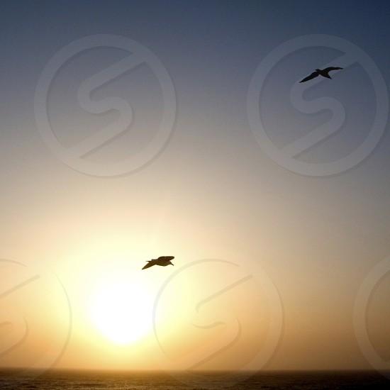 Two Birds in Flight photo