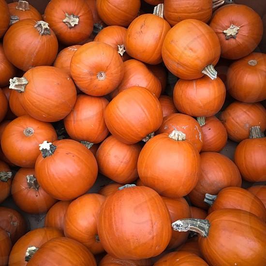 Autumn vibe pumpkins photo