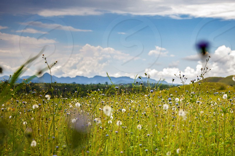 white dandelion field under white and blue cloudy sky photography photo