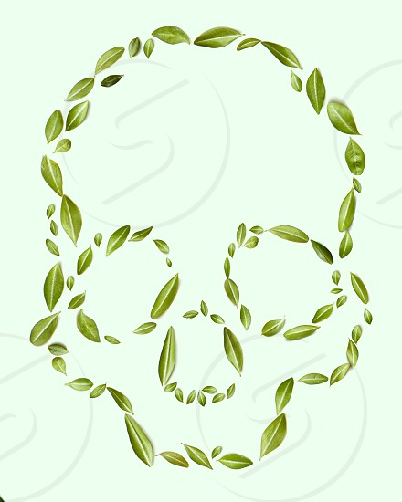 eco concept. A pattern of green leaves in the form of a skull on a green background. Healthy photo