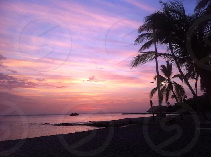 beach coconut trees view photo