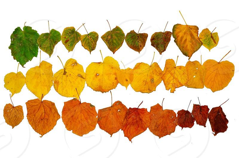autumn foliage gradiation photo