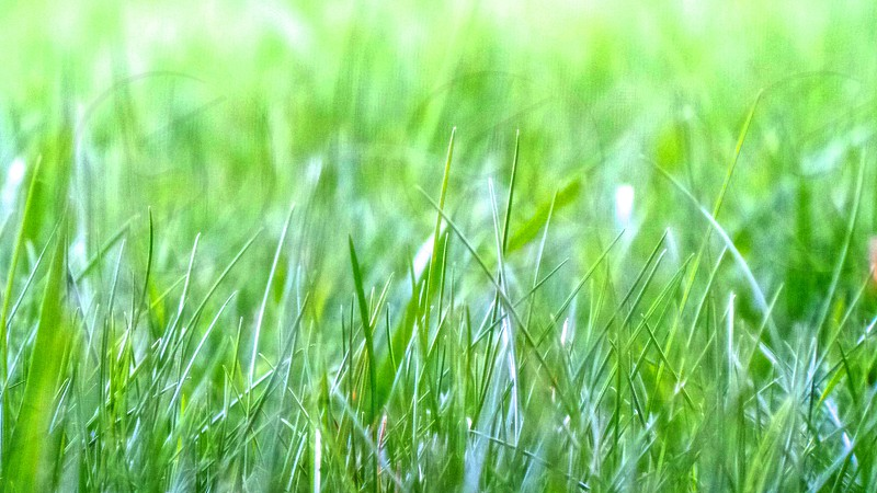 This is some grass that was taken on a very bright day.  photo