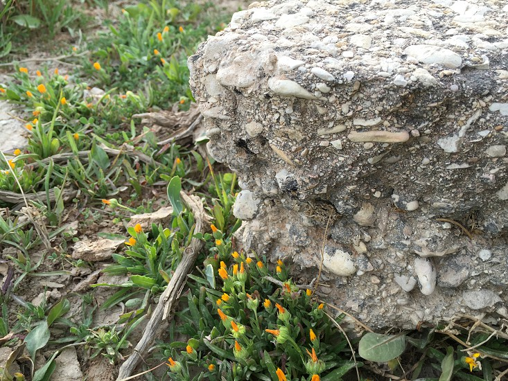 Spring new gorgeous earth moment flower rock photo