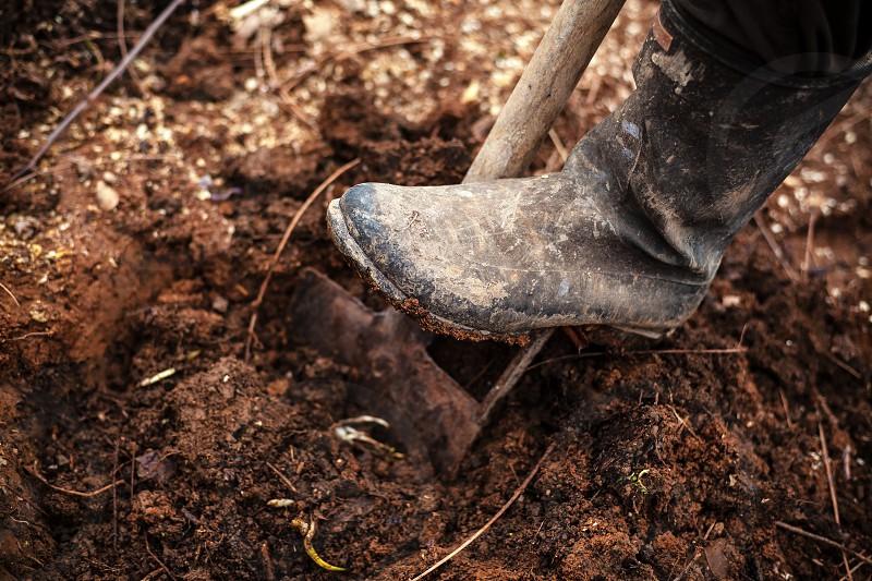Leg in gumboot on shovel digging the soil. photo