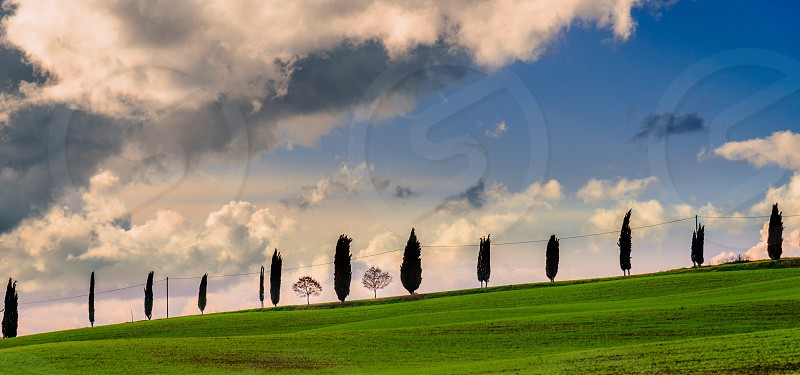 Cypress tree Tuscany Italy countryside siena hills green landscape nature travel travel destination peaceful quiet scenic view sky clouds sunset winter photo