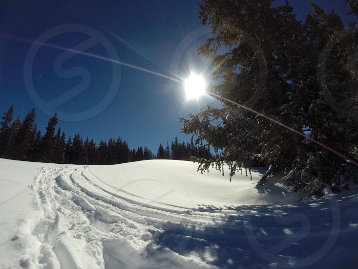 Skiing snow powder trees photo