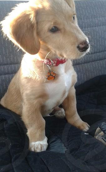 My Puppy Oscar :) photo