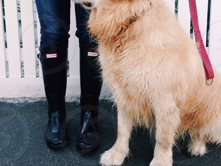 woman in black galoshes and blue denim jeans beside brown short haired medium dog photo