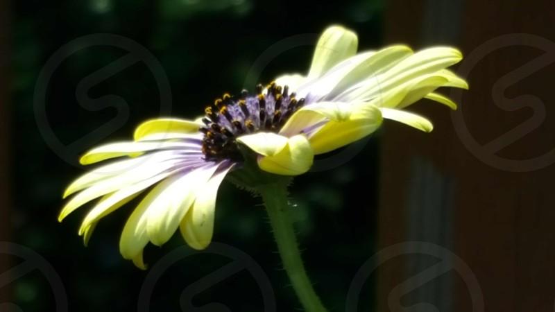 Magnificent Flower photo