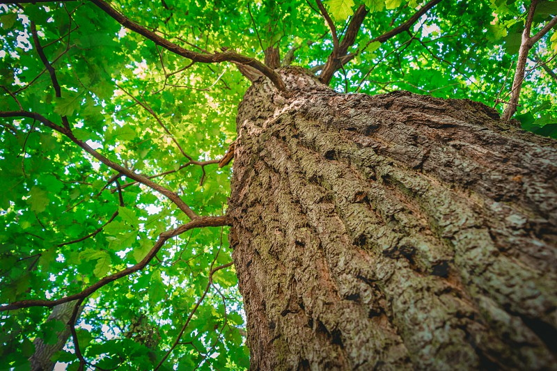 Tree from below with a shallow depth of field. photo