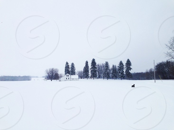 snow field with trees photo