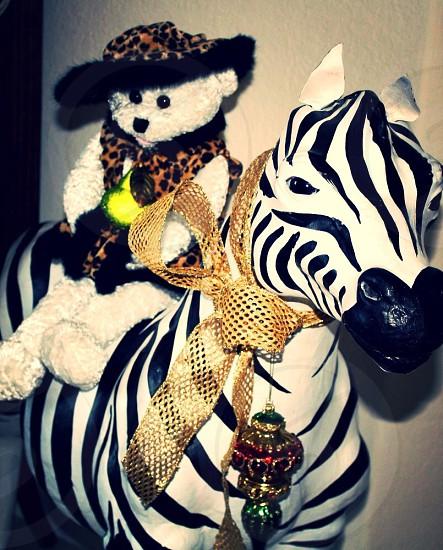 white bear on zebra photo