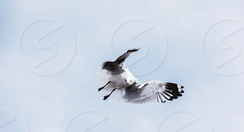 Seagull nature fly sky alone gull photo