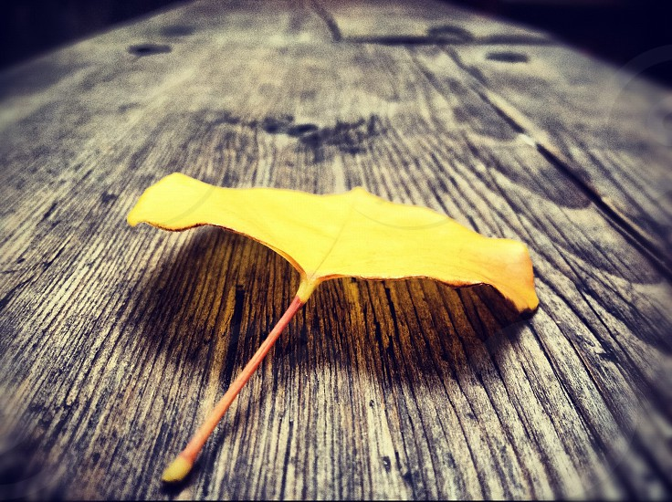 close up photography of yellow leaf on brown wooden table photo