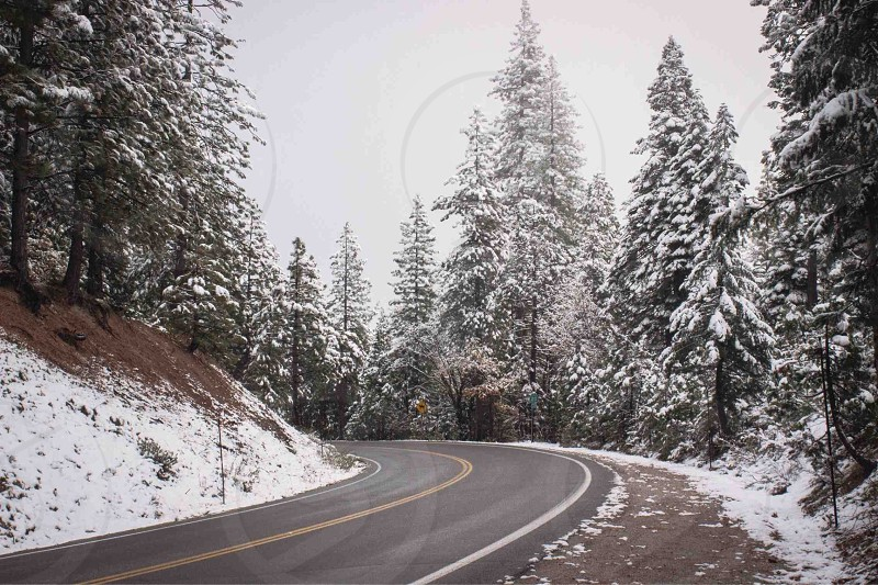 yellow rolled asphalt road with snow covered pine tree forest on side during day photo