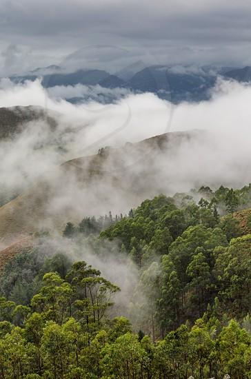 green trees on mountain photo
