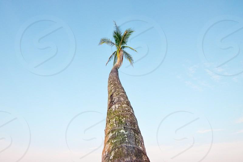 single tree photo