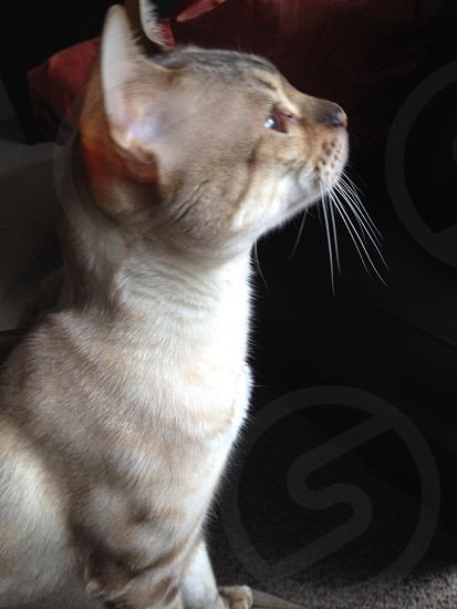 Patience cat photo