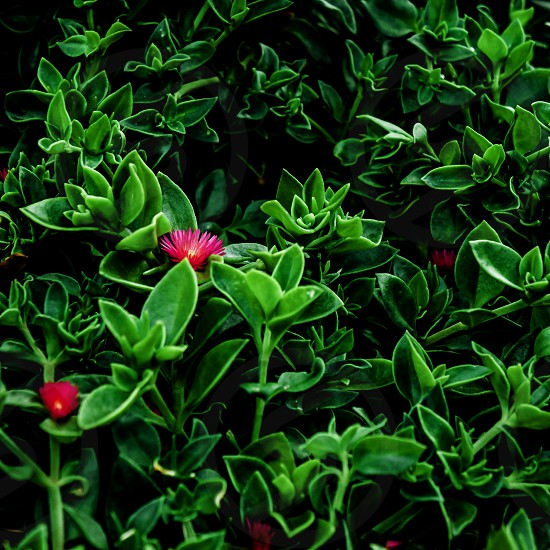 green plant with pink flowers photo