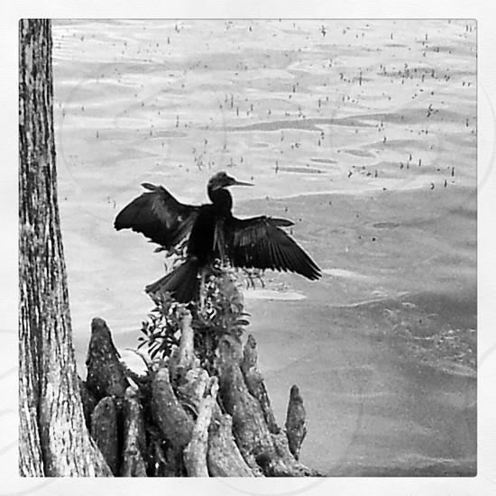 BW Lake Bird photo