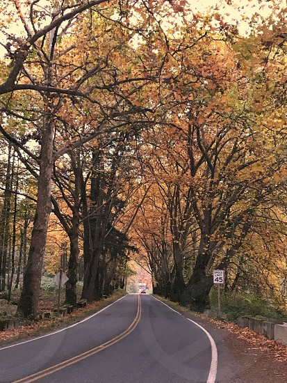 Fall in North Bend Wa. photo