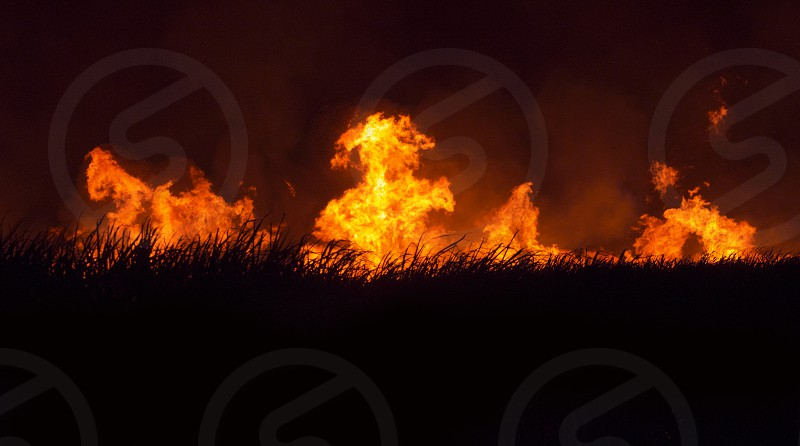 Field of cane sugar crops in Swaziland Africa on fire burning tall bright hot orange flames photo