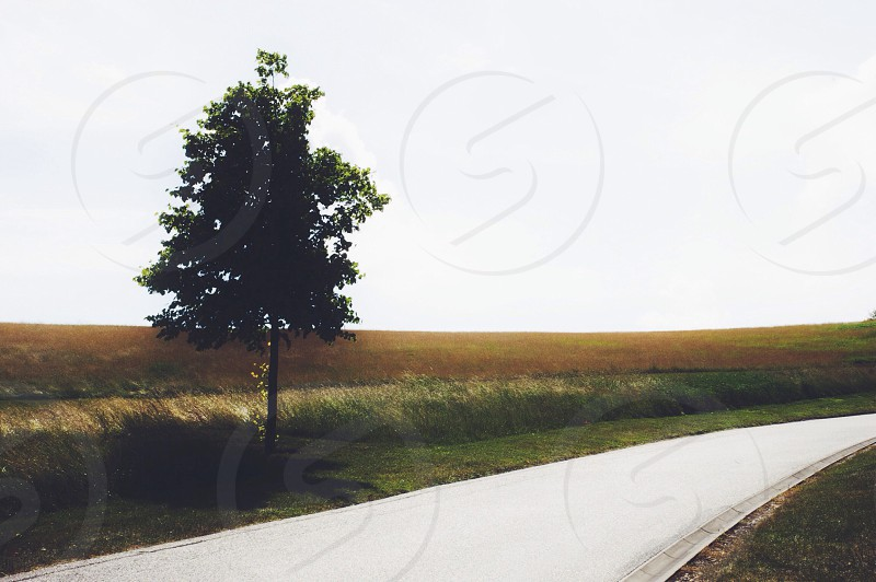 Minimal path + tree.  photo