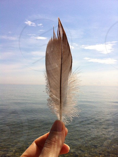 person holding grey and white feather photo