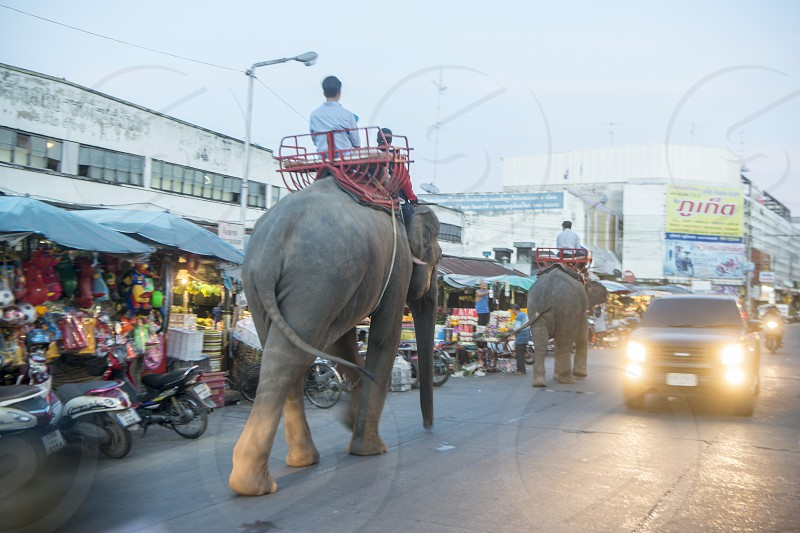 a thai elephant at the  Market in the city of Surin in Isan in Northeast Thailand.  Thailand Isan Surin November 2017 photo