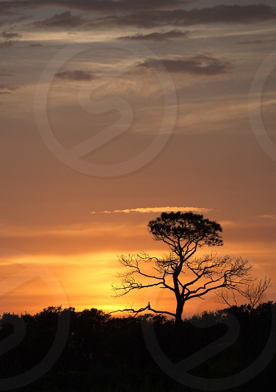 Sunset Tree photo