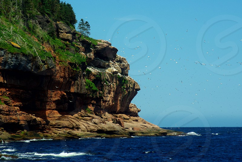 Amazing seascape with a colony of gannets photo