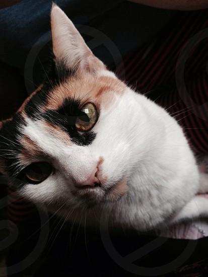 Cat eyes close up photo