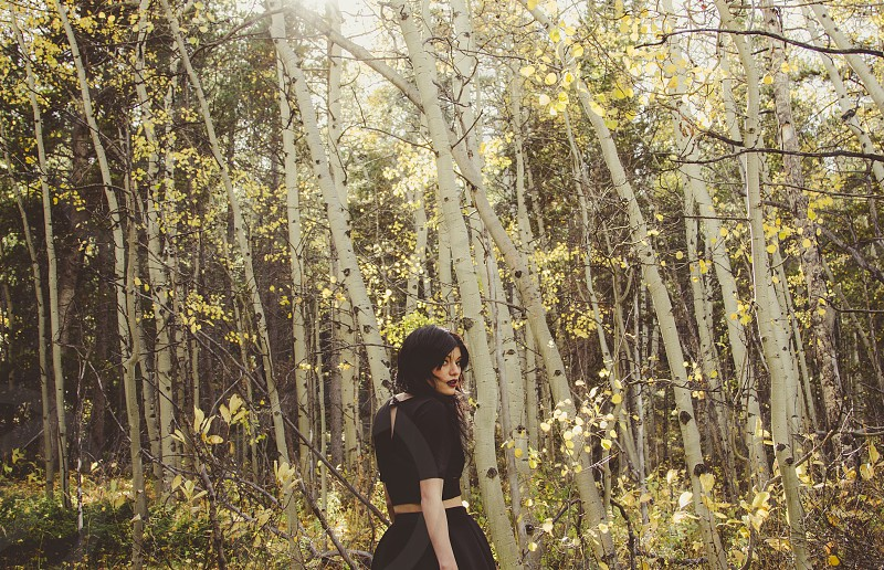 Find me in the honeyed forest. Yellow aspens in autumn in a Colorado forest.  photo