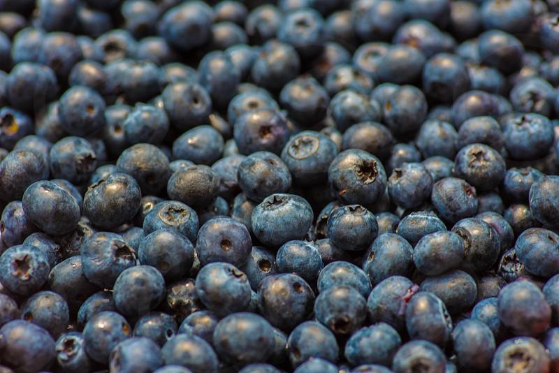 blueberries in tilt shift lens photo