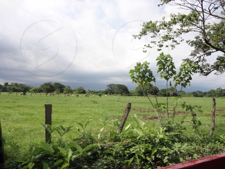 Green pastures back in Guatemala. Pastures. Cows.     photo