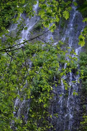 Waterfall seen through trees photo