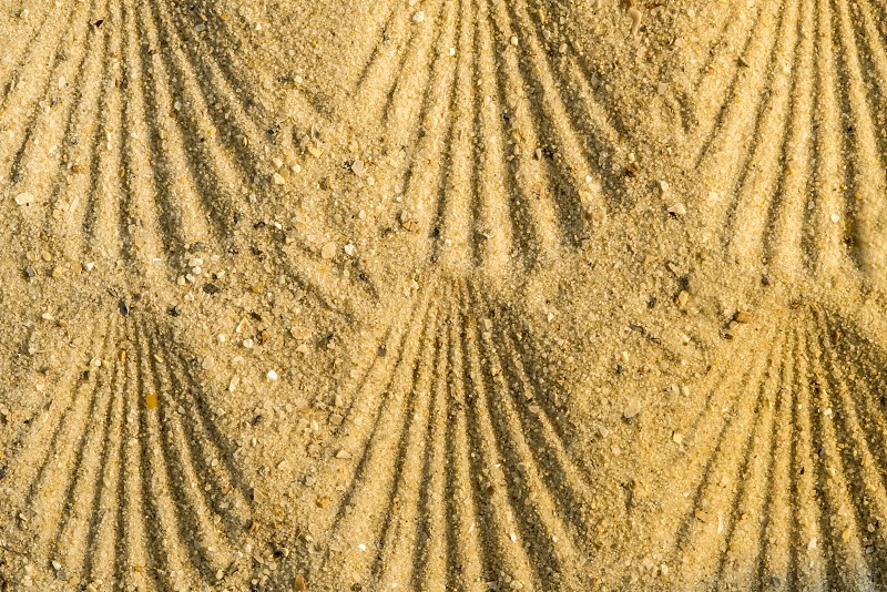 Jacobs shell patterns on a beach photo