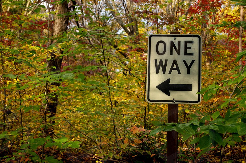 one way sign board on a forest photo