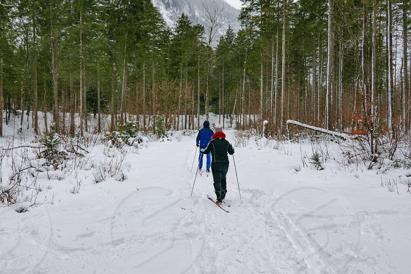 People recreating in winter. Cross country skiing. photo