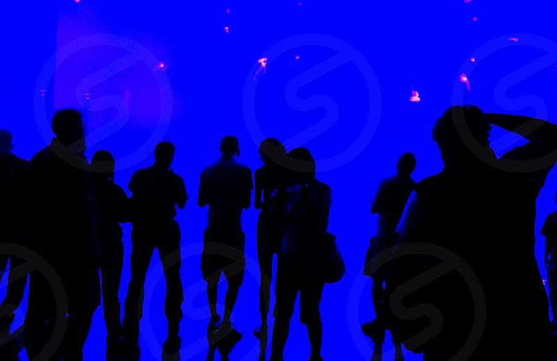 Toronto Display. Silhouette.  photo